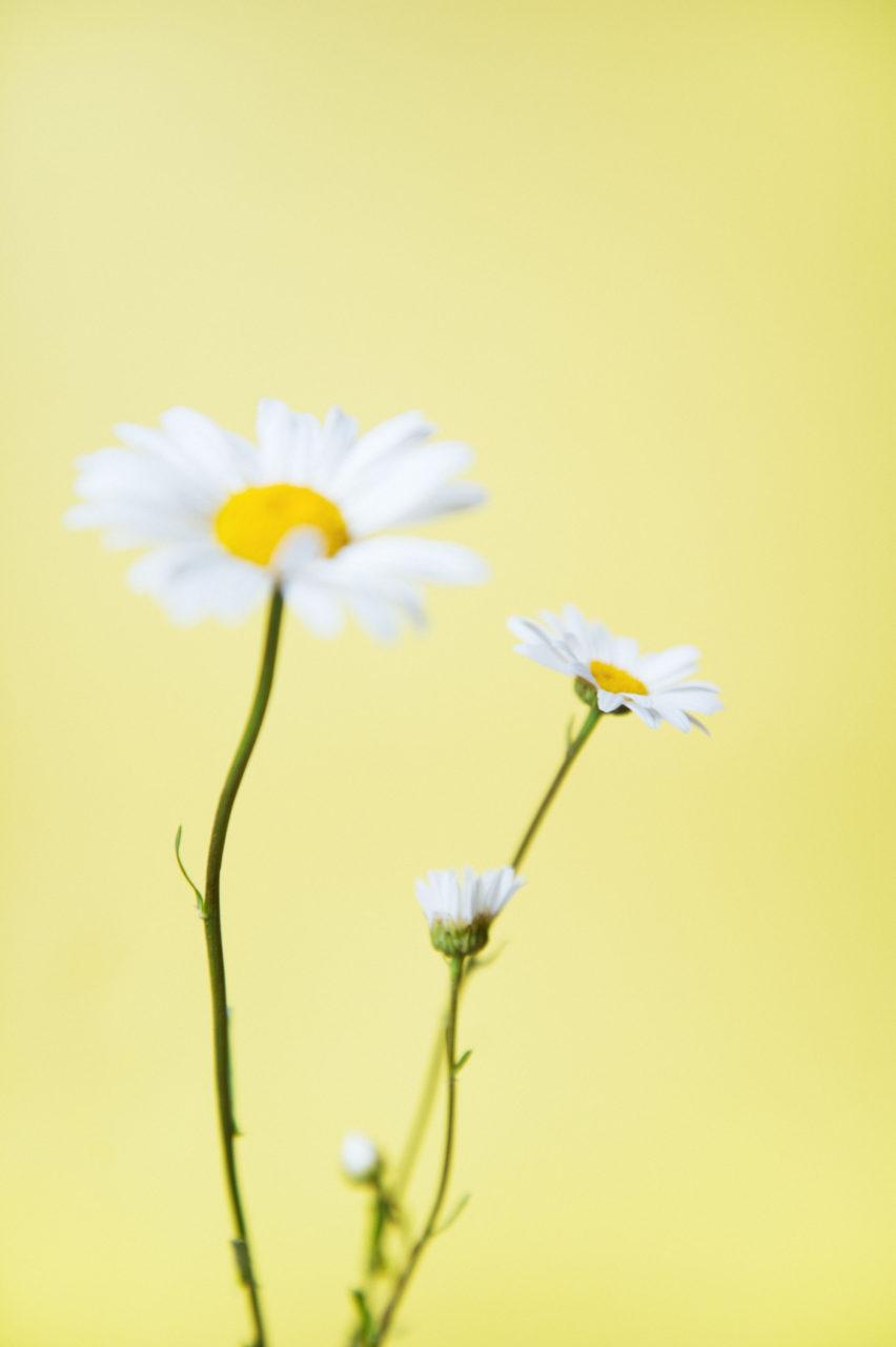 Fleurs / Sarah Aubel